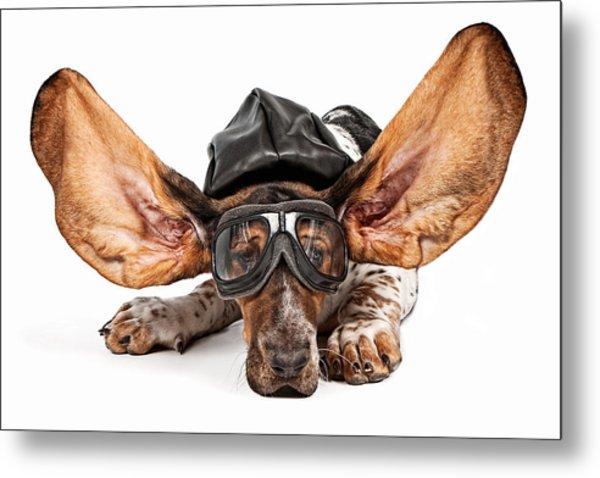 Basset Hound Dog Aviator Metal Print by Susan Schmitz