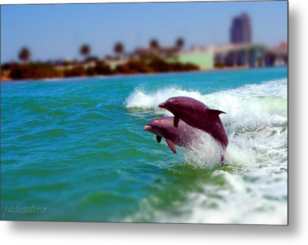 Bay Dolphins Metal Print