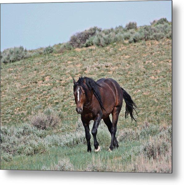 Bay Mustang Stallion Metal Print