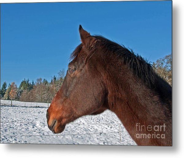 Bay Thoroughbred Horse Side View In Winter Metal Print