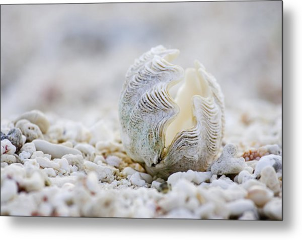 Beach Clam Metal Print