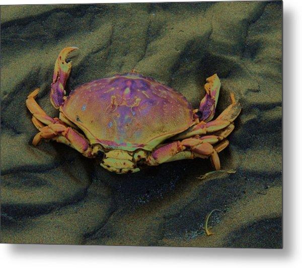 Beach Crab Metal Print by Helen Carson