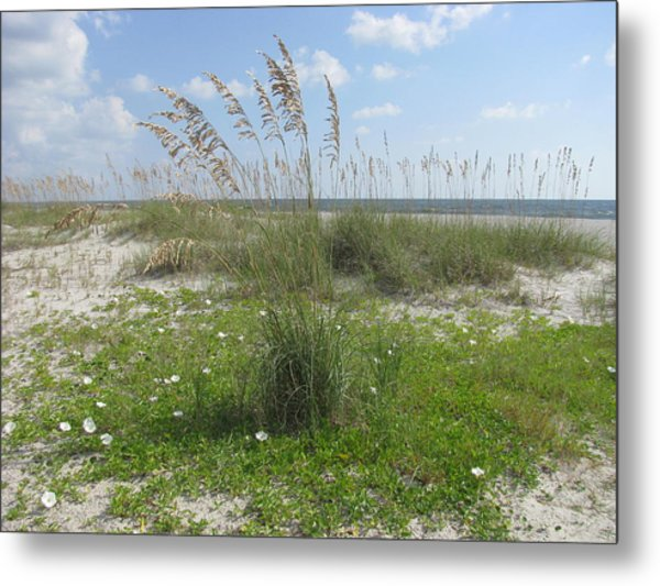 Beach Flowers And Oats 2 Metal Print
