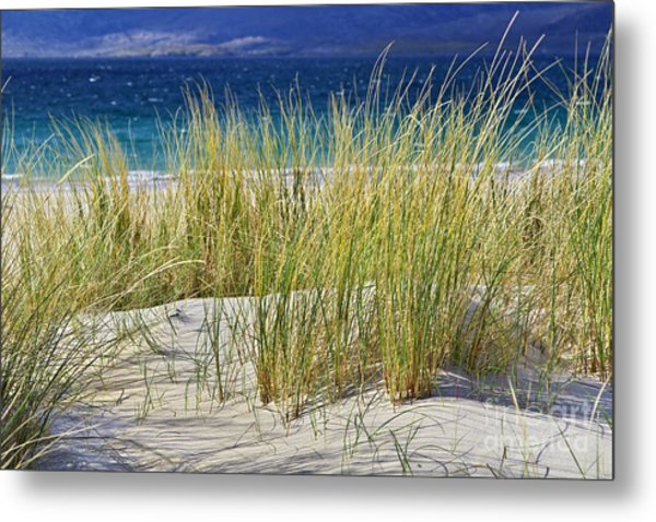 Beach Gras Metal Print