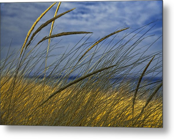Beach Grass On A Sand Dune At Glen Arbor Michigan Metal Print