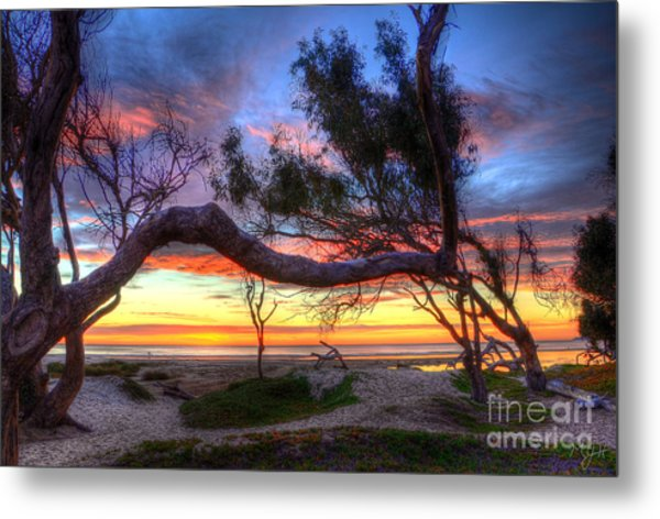 Beach Tree Sunset View Metal Print