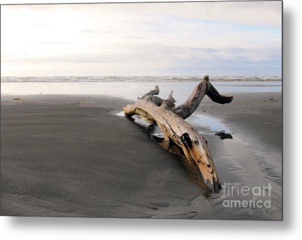 Beached Log Metal Print