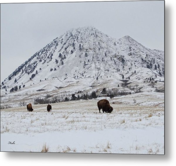 Bear Butte Buffalo Metal Print