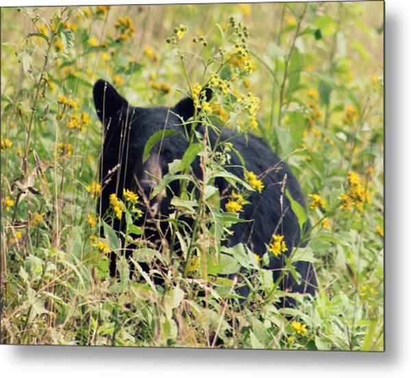 Bear Gaze 2 Metal Print