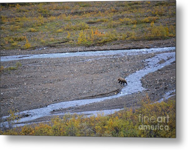 Metal Print featuring the photograph Bear In Alaska by Kate Avery