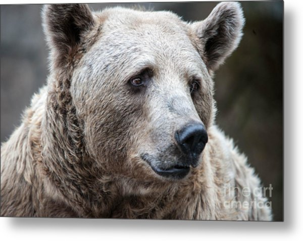 Bear Necessities Metal Print