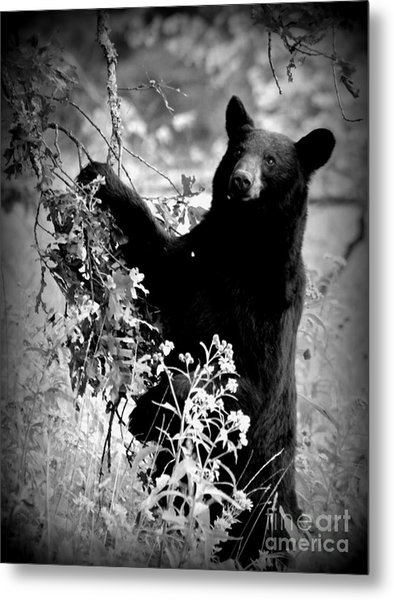 Bear Pose Metal Print