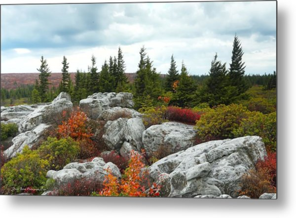 Bear Rocks Metal Print