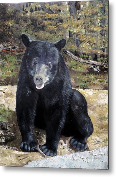 Bear - Wildlife Art - Ursus Americanus Metal Print