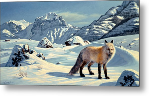 Beartooth Fox Metal Print