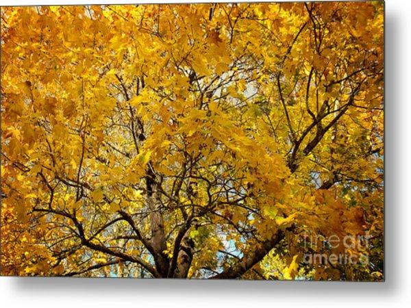 Beautiful Autumn Tree Metal Print by Jolanta Meskauskiene