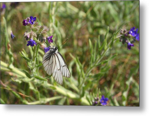 Beautiful Butterfly In Vegetation Metal Print