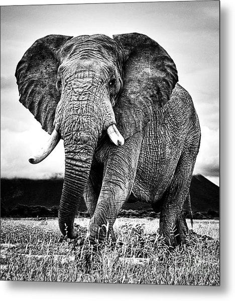 Beautiful Elephant Black And White 33 Metal Print