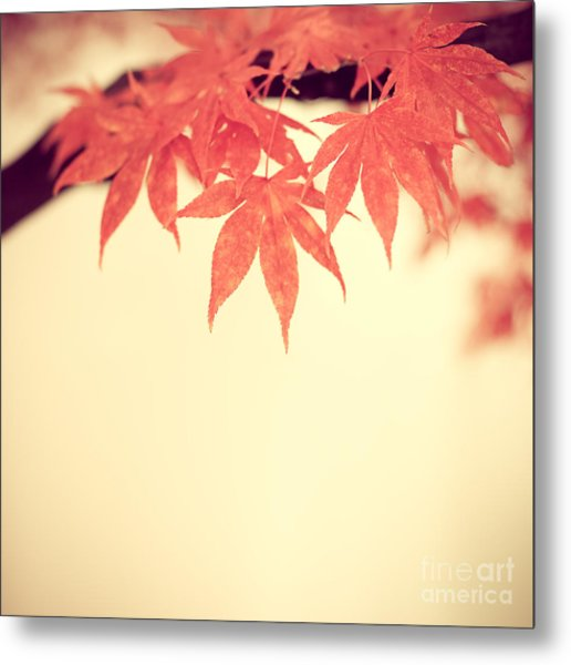 Beautiful Fall Metal Print