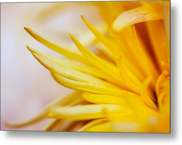 Spring Flower - Nature Photography Metal Print