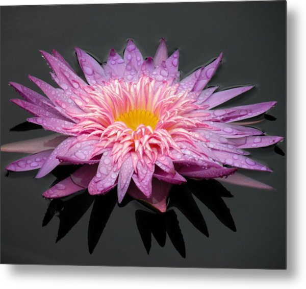 Beautiful Lily Metal Print