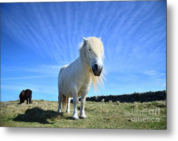 Beautiful Poney Grazing Near The Lizard - Cornwall Metal Print by OUAP Photography