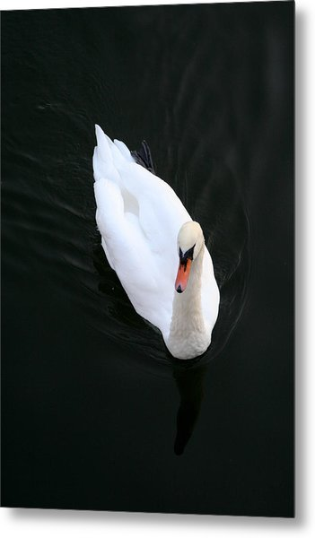 Beautiful Swan Metal Print by Allan Millora