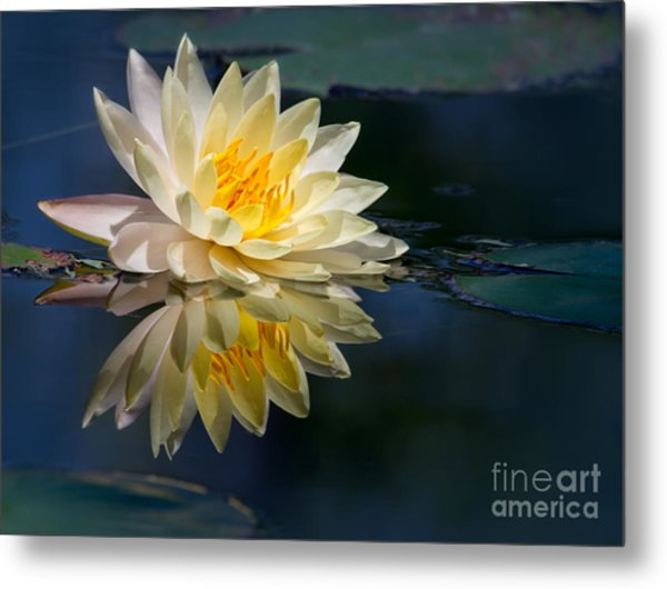 Beautiful Water Lily Reflection Metal Print