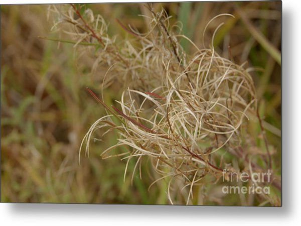 Beautiful Wild Plant Metal Print by Jolanta Meskauskiene