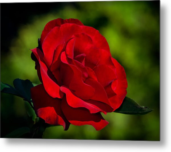Beauty And Charm Metal Print
