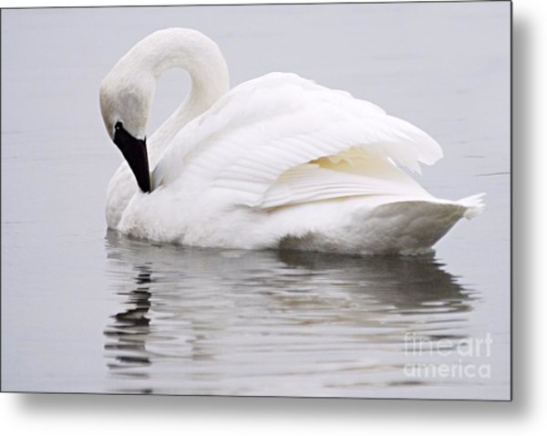 Beauty And Reflection Metal Print