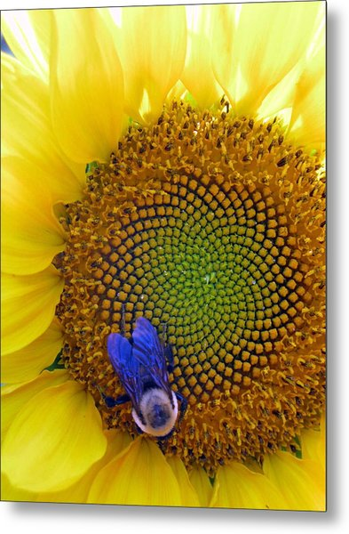 Beauty And The Bee Metal Print by Laura Corebello