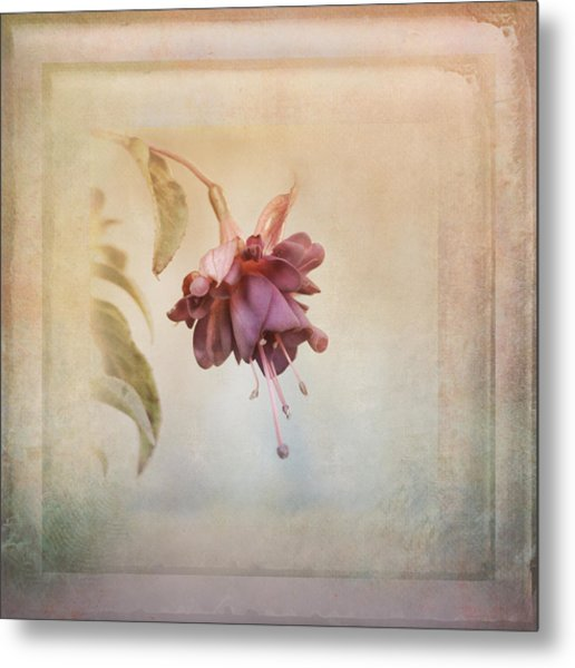 Beauty Fades Softly Framed Metal Print