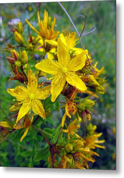 Beauty In A Weed Metal Print