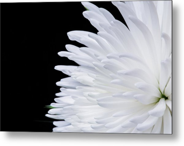 Beauty In Contrast Metal Print