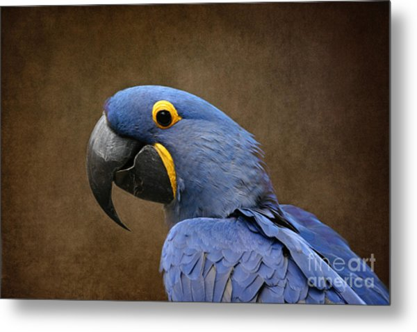 Beauty Is An Enchanted Soul - Hyacinth Macaw - Anodorhynchus Hyacinthinus Metal Print