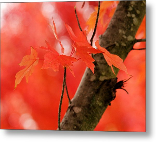 Beauty Of Red Metal Print