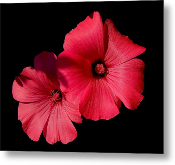 Beauty On The Black #1 Metal Print