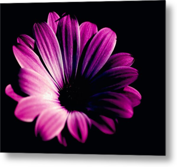 Beauty On The Black #2 Metal Print