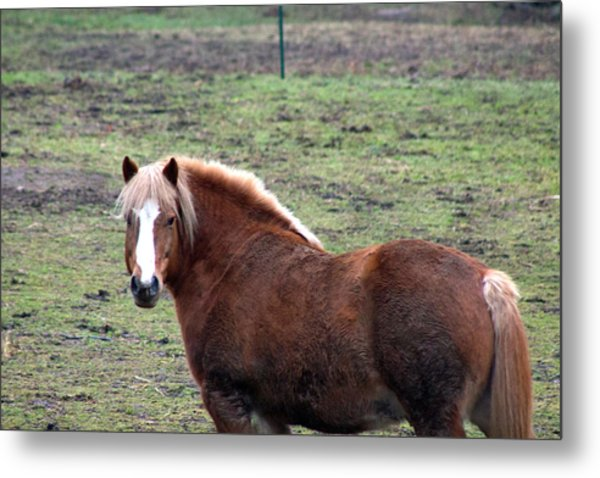 Beauty Metal Print by Rhonda Humphreys