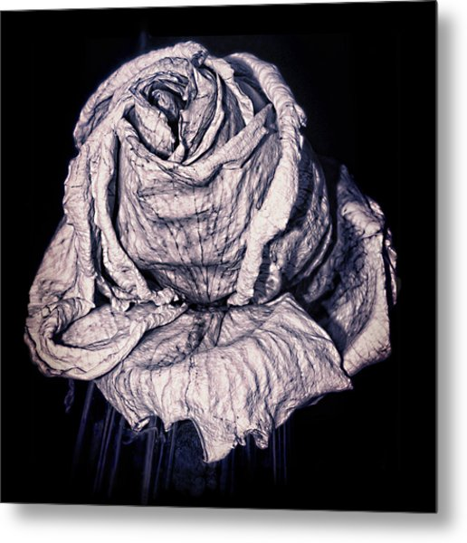 Metal Print featuring the photograph Beauty Wrinkle by Kristi Swift