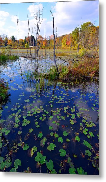 Beaver Marsh In Autumn Metal Print