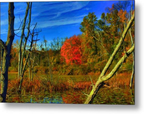 Beaver Marsh In October Metal Print