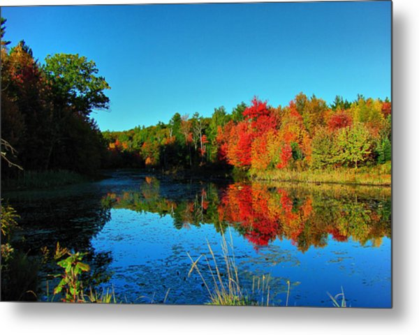 Beaver Pond Foliage Metal Print