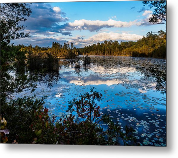 Beaver Pond - Pine Lands Nj Metal Print