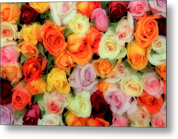 Bed Of Roses Metal Print