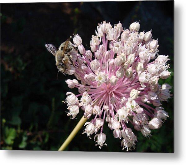 Bee And Allium Metal Print