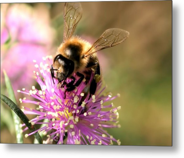 Bee And Blossom Metal Print