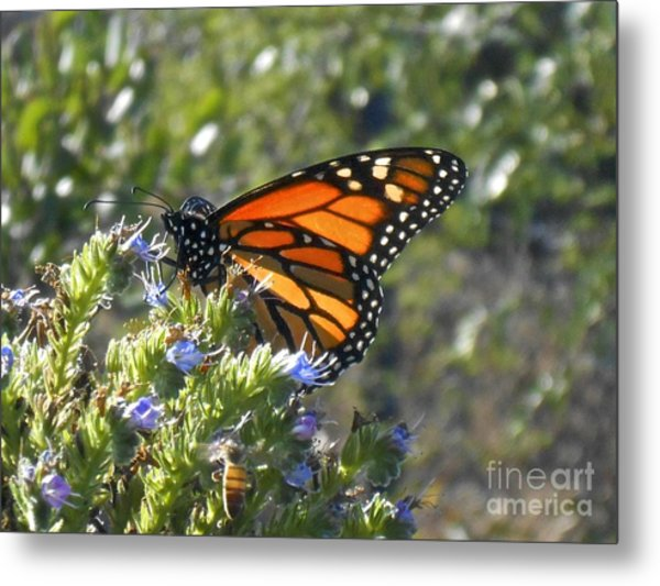 Bee And Monarch  Metal Print