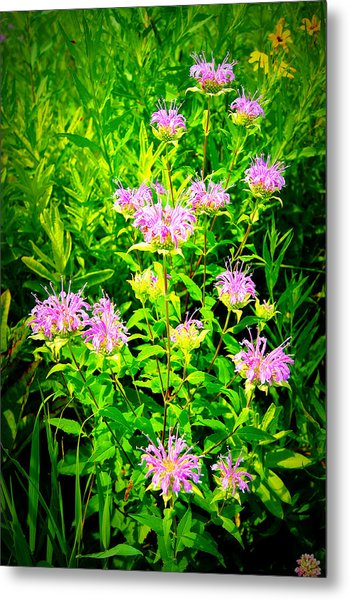 Bee Balm Of The Butterfly Gardens Of Wisconsin Metal Print by Carol Toepke